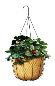 Panacea 84280 12-Inch Rustic Farmhouse Hanging Basket Planter