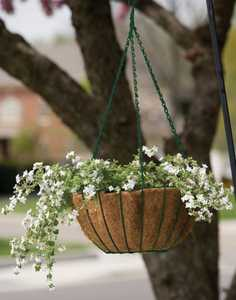 Panacea 88503 14 in Painted Grower Hanging Basket with Chain Green