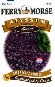 Ferry-Morse Seed Company 1007 Alyssum Royal Carpet Seeds