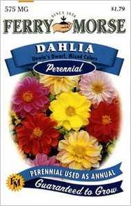 Ferry-Morse Seed Company 1042 Dahlia Unwins Dwarf Seeds
