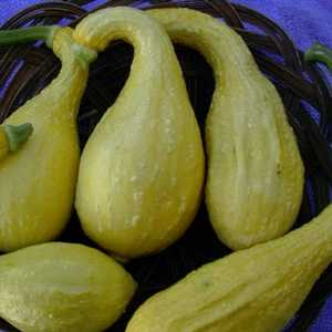 Plantation Products 3203 Squash Early Yellow Crookneck