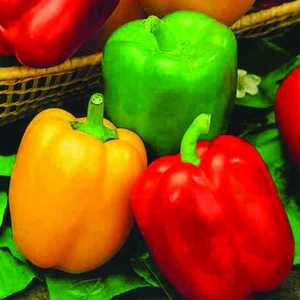 Plantation Products 41618 Grand Bell Pepper Mix