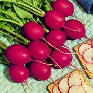 Plantation Products 41669 Radish Early Scarlet Globe