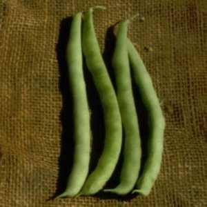 Plantation Products 41704 Kentucky Wonder Garden Bean