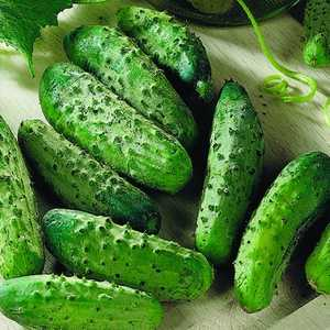 Plantation Products 41715 National Pickling Cucumber