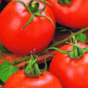 Plantation Products 41674 Better Boy Hybrid Tomato