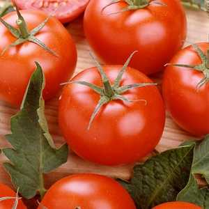 Plantation Products 41675 Rutgers Tomato