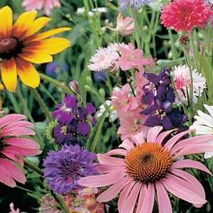 Plantation Products 41722 Bird & Butterfly Wildflower Mix