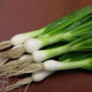 Plantation Products 41806 Onion White Lisbon Bunching
