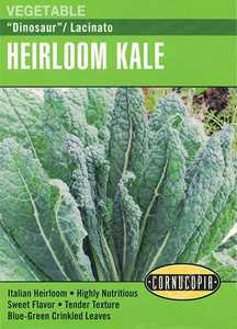 Cornucopia Garden Seeds 286 Dinosaur Lacinato Heirloom Kale Seeds