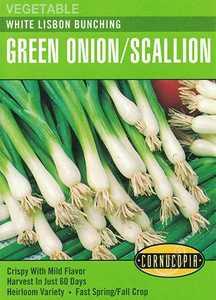 Cornucopia Garden Seeds 163 White Lisbon Bunching Green Onion /Scallion Seeds