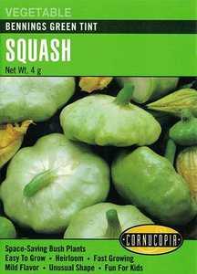 Cornucopia Garden Seeds 176 Bennings Green Tint Squash Seeds