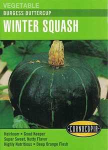Cornucopia Garden Seeds 296 Burgess Buttercup Winter Squash