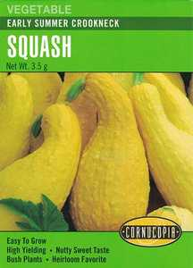 Cornucopia Garden Seeds 179 Early Summer Crookneck Squash Seeds