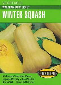 Cornucopia Garden Seeds 251 Waltham Butternut Winter Squash Seeds