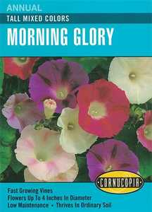 Cornucopia Garden Seeds 124 Tall Mixed Colors Morning Glory Seeds