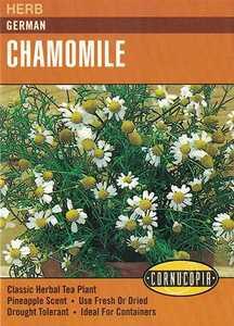 Cornucopia Garden Seeds 240 German Chamomile Seeds