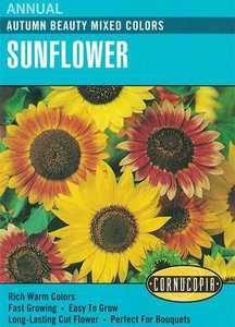 Cornucopia Garden Seeds 133 Autumn Beauty Mixed Colors Sunflower Seeds