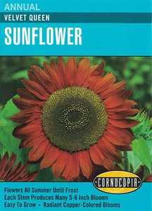 Cornucopia Garden Seeds 202 Velvet Queen Sunflower Seeds