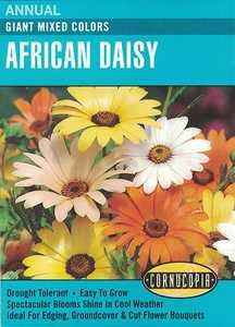 Cornucopia Garden Seeds 108 Giant Mixed Colors African Daisy Seeds