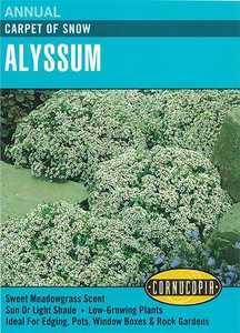 Cornucopia Garden Seeds 109 Carpet Of Snow Alyssum Seeds