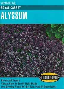 Cornucopia Garden Seeds 111 Royal Carpet Alyssum Seeds