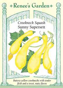 Renee's Garden Seed Co. 5364 Sunny Supersett Crookneck Squash Seeds