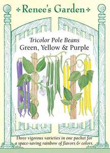 Renee's Garden Seed Co. 5560 Green Yellow And Purple Tricolor Pole Bean Seeds