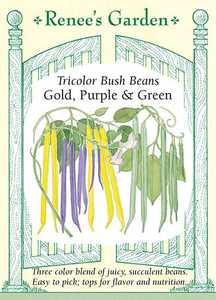 Renee's Garden Seed Co. 5550 Gold Purple And Green Tricolor Bush Bean Seeds