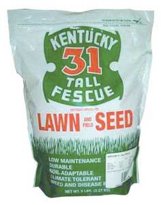 Tri Star Seed 5LB Ky31 Tall Fescue Grass Seed 5lb