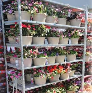 Sutherlands Garden Dept PLANT 10 in Hanging Basket