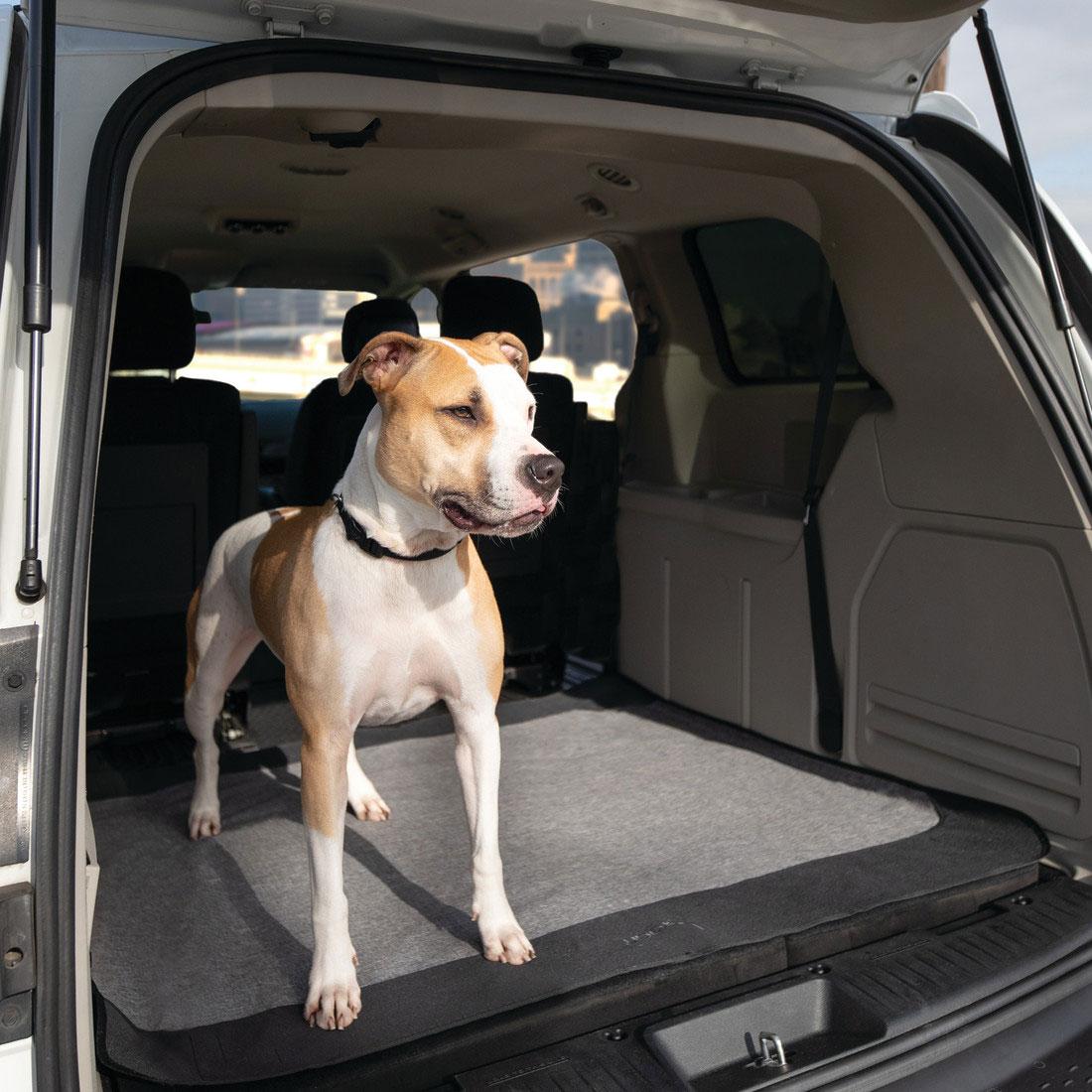 Coastal Pet Products 88870 GRB FLR