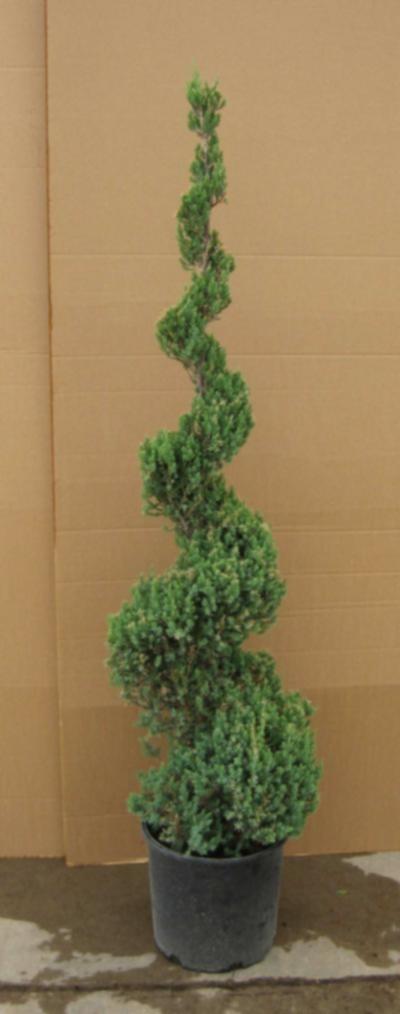Greenleaf Nursery 0154.070.1