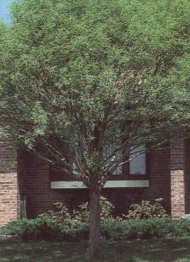 Greenleaf Nursery 8845.050.1